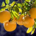 Orange's avatar