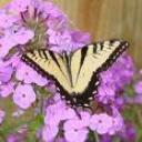 borboleta's avatar