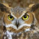 The Wise Old Owl