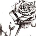 Regina Rose's avatar