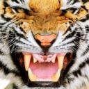 DSQ's avatar