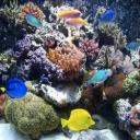 Coral Reef Forum