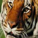 Shakir's avatar