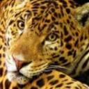 Lalolola's avatar