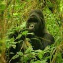 chimpsarestarving's avatar