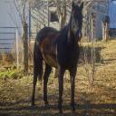Dark Horse's avatar