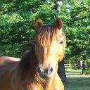 Equestrienne1979's avatar