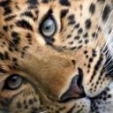 Lucario's avatar