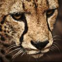 Ririen's avatar