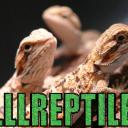 LLLReptile and Supply Co, Inc's avatar