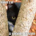 kamikaze ninja