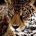 Fernanda's avatar