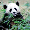 Panda Wuver's avatar