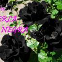 perla negra de nervo's avatar