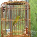 小林鳥園's avatar