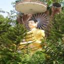 Tâm Phật