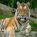M Tiger's avatar