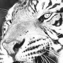 ekipataho's avatar