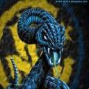 anaconda nerazzura F.C.I's avatar
