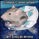 rat racer's avatar