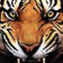 chika_kangri_pr's avatar