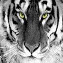 ẂҢITẼ Τ1Ĝ3Ř's avatar