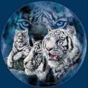 white lion's avatar