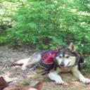 Wolf Grrl's avatar