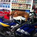 愛騎車的女孩's avatar