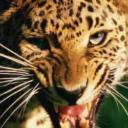 Leopard Tung's avatar