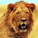 king's avatar