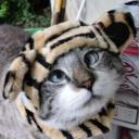 TIGER TIGER TIGER's avatar
