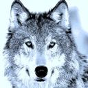 wolf48's avatar