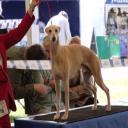 Hound Dog's avatar