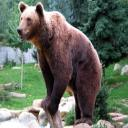 Bear A's avatar