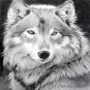 Lycanthropy's avatar