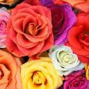 rosebuds's avatar