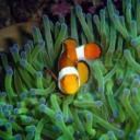 小魚兒's avatar