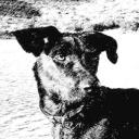 VoskiMoscow's avatar