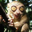 Psychotic Lemur