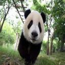 Lost Panda's avatar
