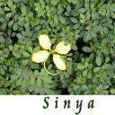 Sinya's avatar