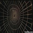 spiderjane