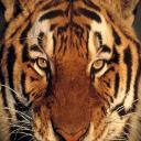 Cyrene J's avatar