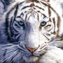 Babi's avatar