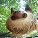 five toed sloth