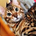 豹貓噢's avatar