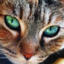 catlover's avatar