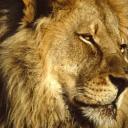 LionOfJudah's avatar