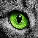 Ojo de gato's avatar